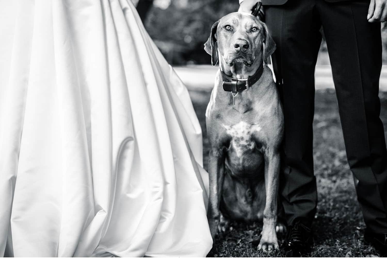 alina tom uppsala brollop kerrouphotography 316 - Alina & Tom wedding